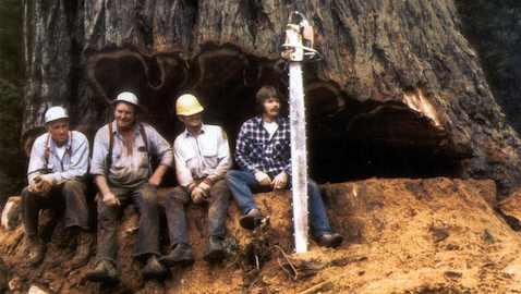 redwood-logging_slide