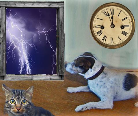 dogwithLD&Lightning