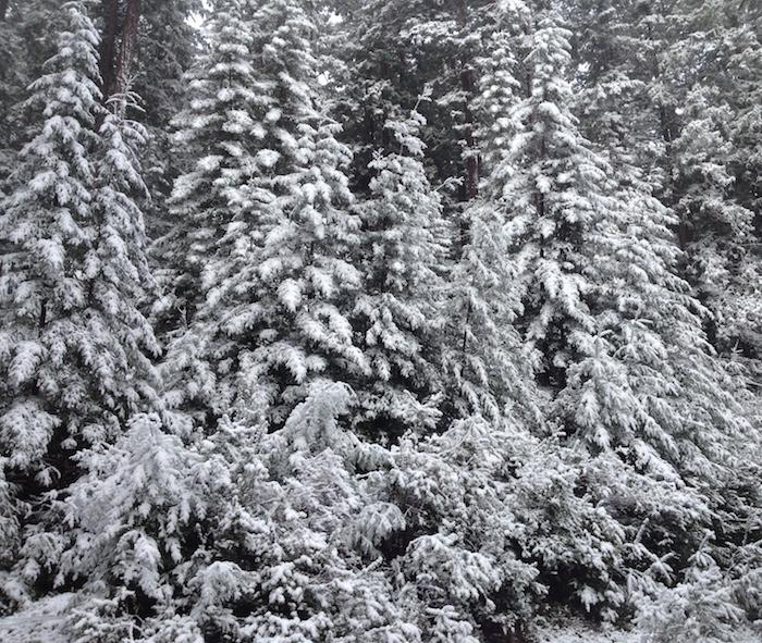 snow10feb2019