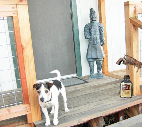 DogwithGun&Bottle
