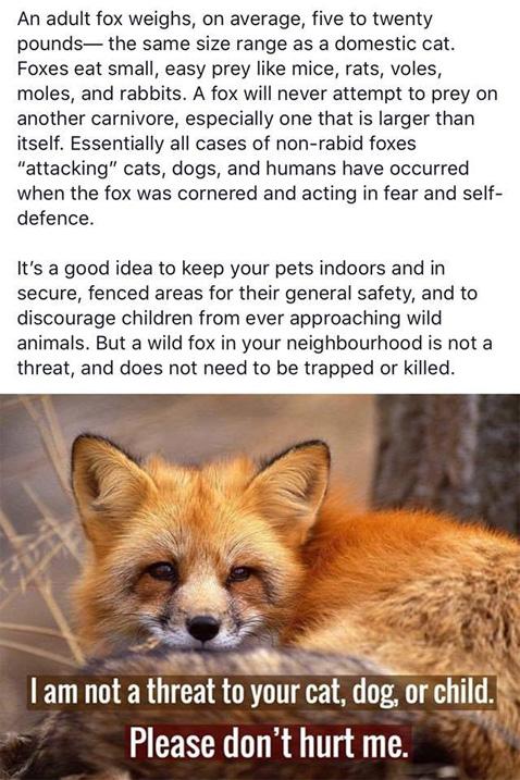 FoxesRsafe