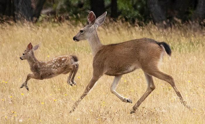 DeerSeasonLW