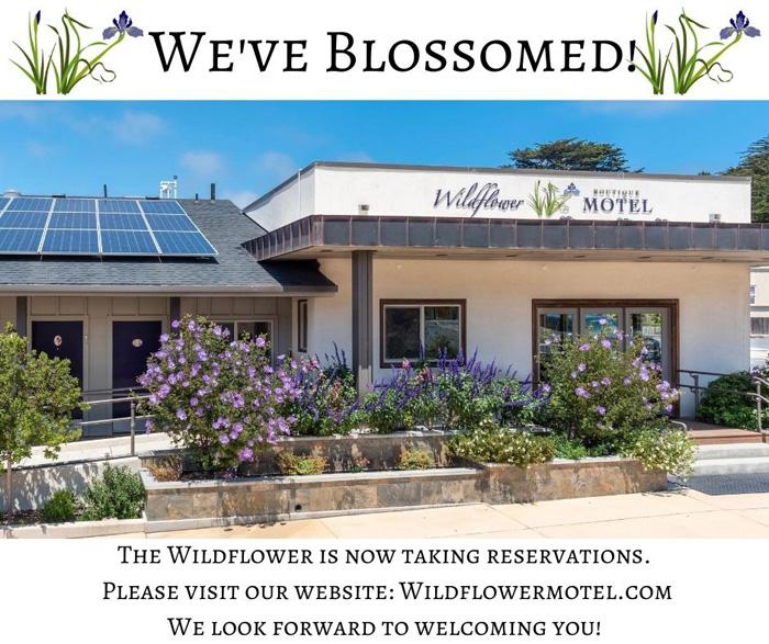 WildflowerMotel