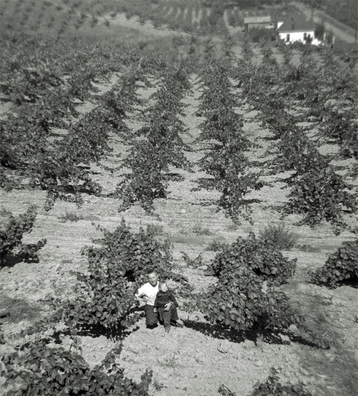 Calpella1950