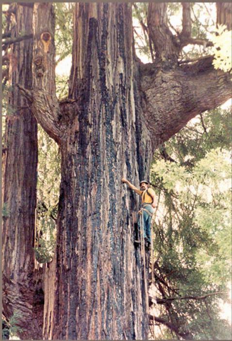 RedwoodBigRiver