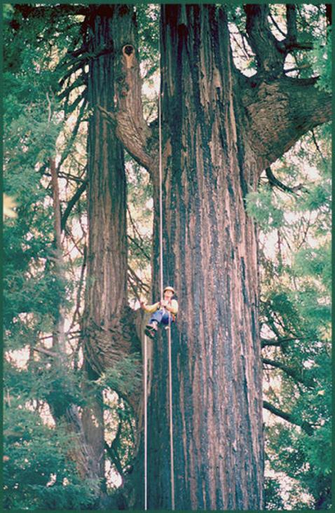 RedwoodBigRiver2