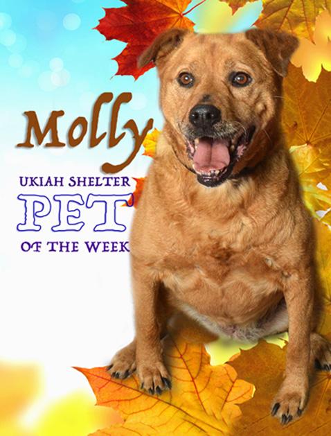 Molly-POW1